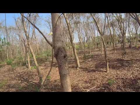 【生存遊戲】20190208 樹林手槍戰