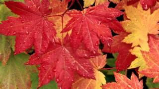 André Rieu - Les Feuilles Mortes (Autumn Leaves)