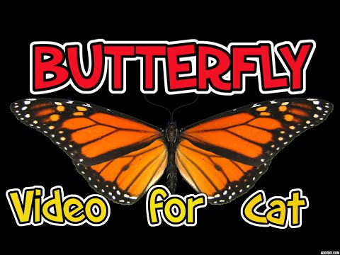 Videos for Cats to Watch – BUTTERFLY video for your cats