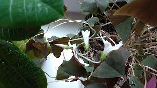 Комнатные растения после специального душа