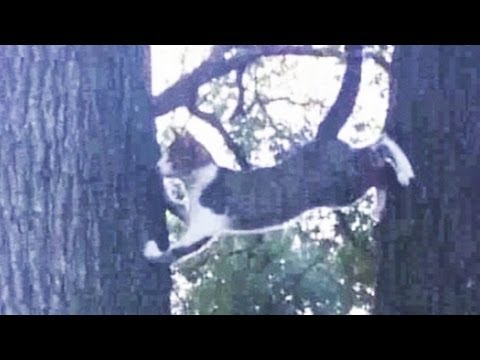 Cat Caught Between Two Tree Trunks - What To Do?