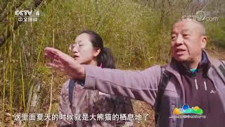 [远方的家]大熊猫国家公园佛坪管理分局 秦岭:大熊猫的传统家园| CCTV中文国际 - YouTube