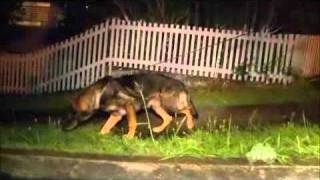 Send In The Dogs Australia S01E01 Part 1 of 2