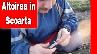 Repeat youtube video Altoirea sub scoarta (coaja) in cap de altoire / grafting in the bark / innesto a corona