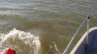 Raw Video: Rare Pink Dolphin in Louisiana