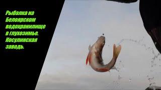 Рыбалка на Белоярском водохранилище в глухозимье Косулинская заводь