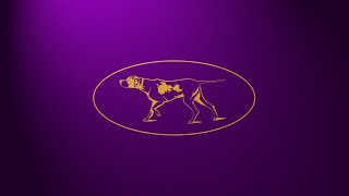 145th Westminster Kennel Club Dog Show  Day 1