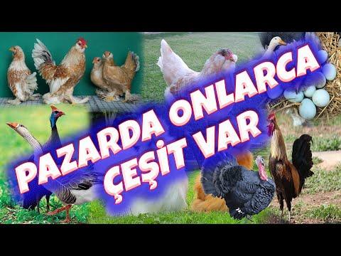 Sezon Açılıyor Çeşit Artıyor   Ankara Tavuk Pazarı