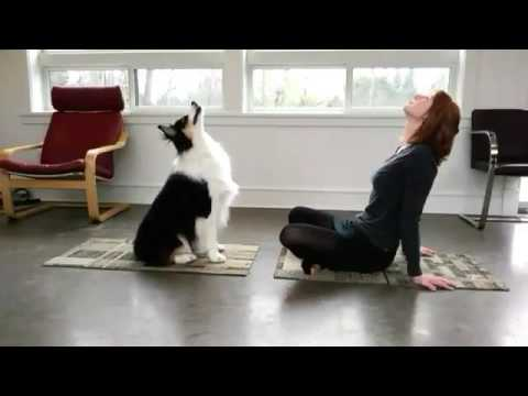 Dog Is Doing Yoga With His Owner 🙌🏼🐶👌👏🏼 Watch This 👈🏼