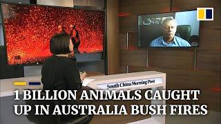 Australia bush fires have affected over 1 billion animals, pushing many toward extinction