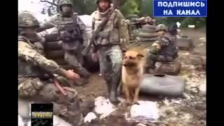 УЖАС! Киев заливает КРОВЬЮ своих же солдат весь юго-восток! Новости Украина, 2014