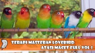 Terapi Masteran Lovebird Atasi Macet Full Vol 1