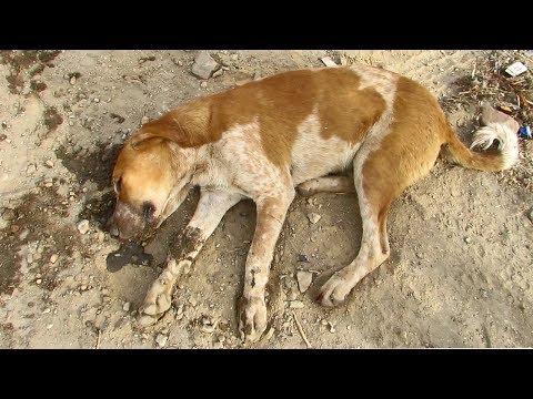 Dog comatose on roadside makes amazing recovery
