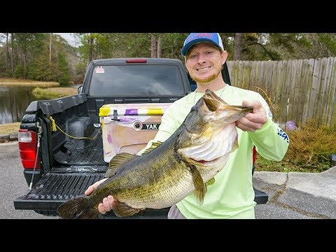 BIG Live Shiners(Live Bait) For TROPHY BASS!!!