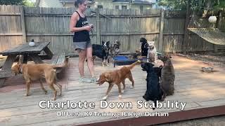 Welsh Terrier 7mo 'Charlotte'  Welsh Terrier Training