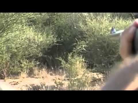 Lion Hunt in Kalahari with Spiral Horn Safaris