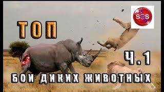 Самые удивительные бои диких животных ч.1 /  ТОП /  Самые большие машины в мире