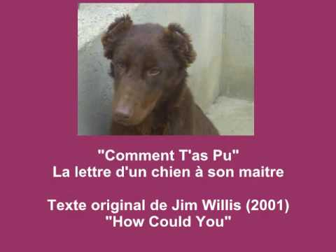 Comment Tas Pu Lettre Dun Chien à Son Maitre How Could You