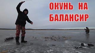 Первый лед Ловля щуки на жерлицы и окуня на балансир