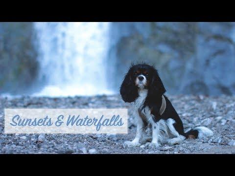 Sunsets & Waterfalls | Cavalier King Charles Spaniel