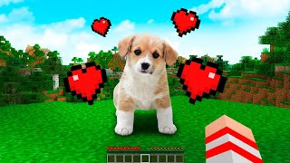 ENCONTREI O CACHORRO MAIS FOFO DO MINECRAFT !