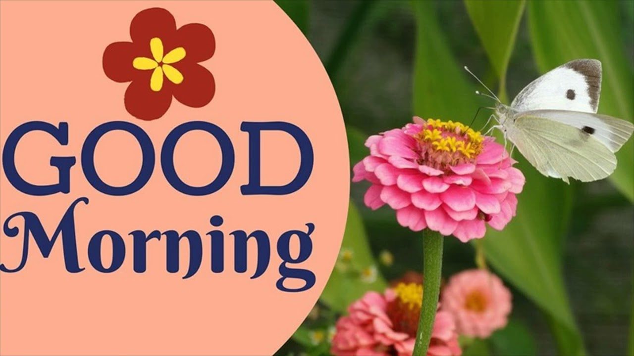 Good Morning Images With Flowers Youtube