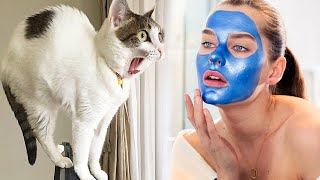Funny cats scared of random things  Best Scared & Startled Cats Compilation