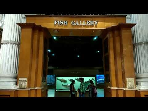 Fish gallery indian museam...