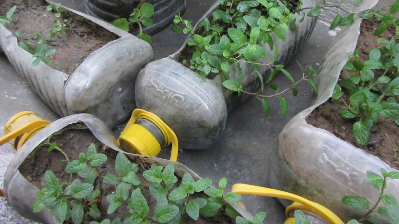Bottle Garden | Amazing Bottle Gardening Techniques | Urdu/Hindi ...