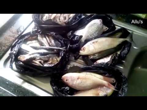 Cutting and cleaning of fish|Storing of ginger garlic paste