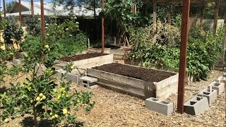 How to Plant a Raised Bed Garden