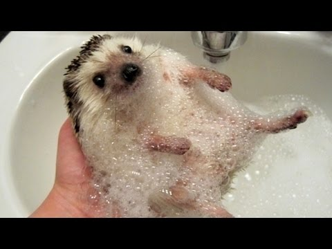 Thumbnail: Funny ANIMALS make us laugh - Funny animal compilation