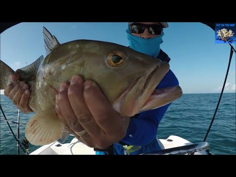 Grouper Fishing Gulf of Mexico Reef Fishing Clearwater reef