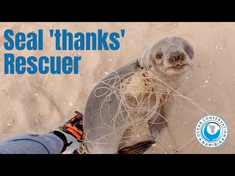Baby seal THANKS his rescuers