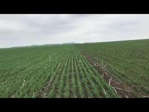 Влияние фосфорных удобрение на рост растений.