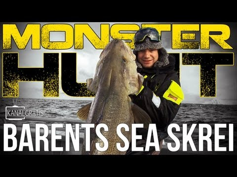 Monster Hunt - Barents Sea Skrei (Cod)