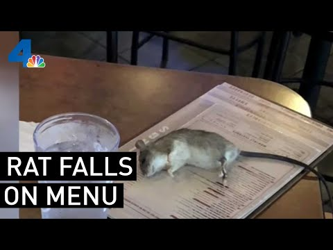 Mychal Maguire - Rat Drops From A Ceiling Onto A Customer's Menu