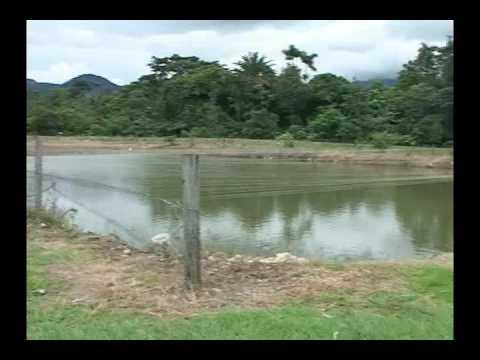 calidad de aguas en piscicultura youtube