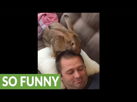 Giant rabbit gives owner 'new haircut'