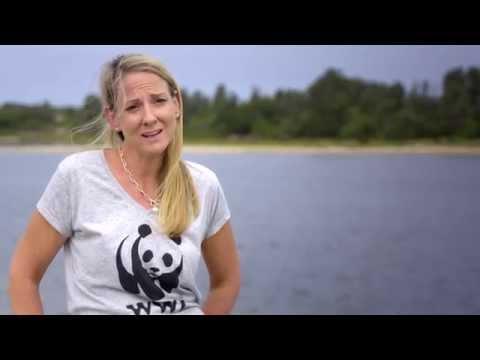 Fishery Improvement Project - SETFIA, WWF-Australia, Coles