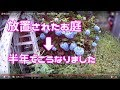 住民退去→半年放置されたお庭→雑草で埋め尽くされる #5