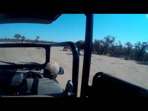 South  Africa Kruger Safari   Elephants Threat to our Jeep
