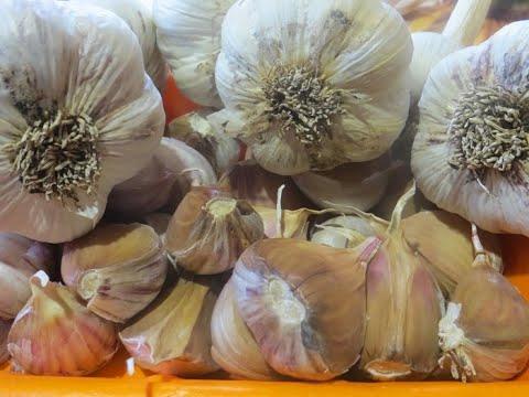 Дача - сезон 2020 г. Октябрь - посадка чеснока, лука, картофеля и посев моркови под зиму. Что и как.