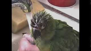 CRAZY BIRD TAKING A BATH IN THE KITCHEN SINK