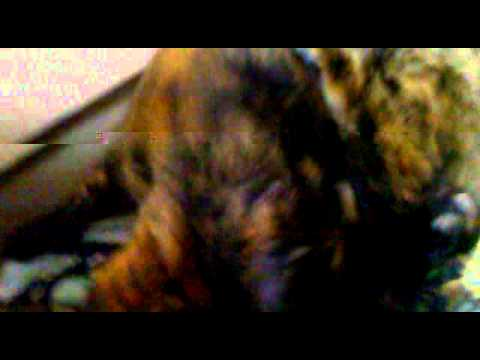 Mengambil uri kucing (My cat) - YouTube
