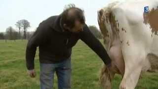 Dubens B la seule vache prim holstein de Picardie au Salon de l'Agriculture