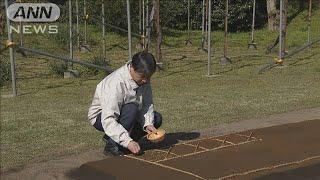 天皇陛下が上皇さまから引き継いだ稲の種まきをされました。 天皇陛下は14日午後、マスク姿で皇居に入り、稲の苗となる種もみをまかれまし...