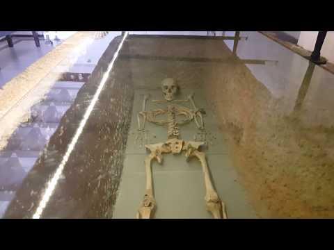 Queen Ada Skeletons