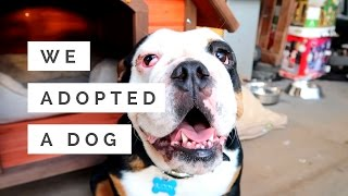 WE ADOPTED A  DOG MARCH30VLOG12