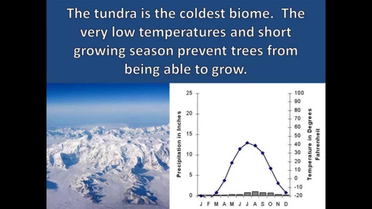 Tundra Adaptations - YouTube